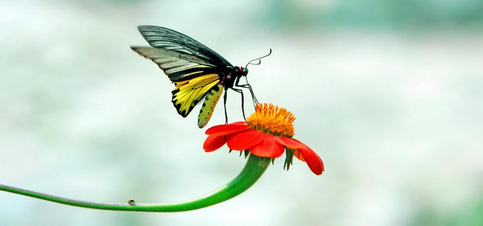 nature photographer in bangkok